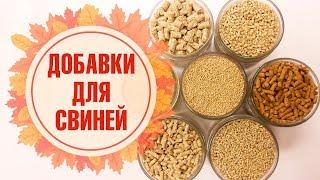 Кормовые добавки для свиней ЗДРАВУР 🌟 Ваше хозяйство 🌟 Обзор от hitsadTV