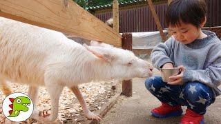 おでかけ 富士サファリパークに行ったよpart2❤動物園 Toy Kids トイキッズ anpanman thumbnail