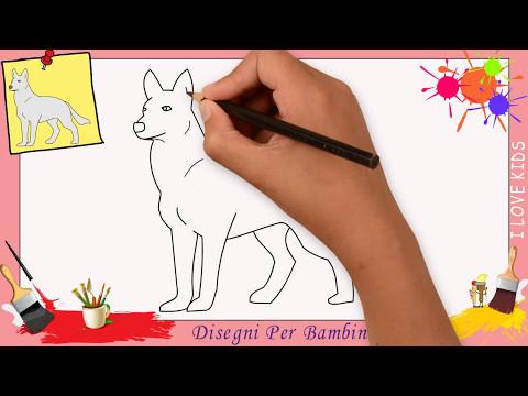 Disegni Di Lupo Come Disegnare Un Lupo Facile Passo Per Passo