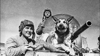 2 танкиста и собака (бот прости, но ты еще та собака :) )