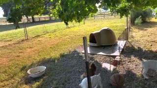 Дон Пабло - Пенсильвания(13)Амиши ! Самокат ! Собаки ! Олени !