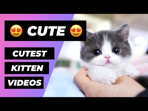 Baby Cats 🔴 Funny and Cute Baby Cat Videos Compilation (2018) Gatitos Bebes Video Recopilacion