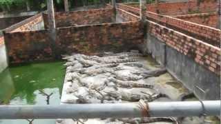 крокодиловая ферма Вьетнам Фукуок(Crocodile Farm Vietnam Phu Quoc)