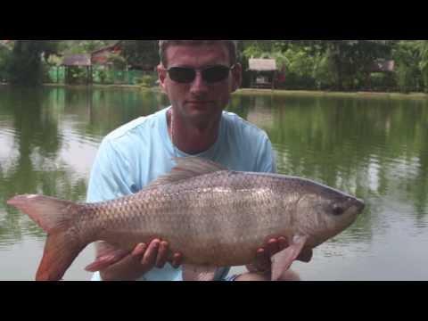 Lake Fishing Thailand - AC Phuket Fishing Park