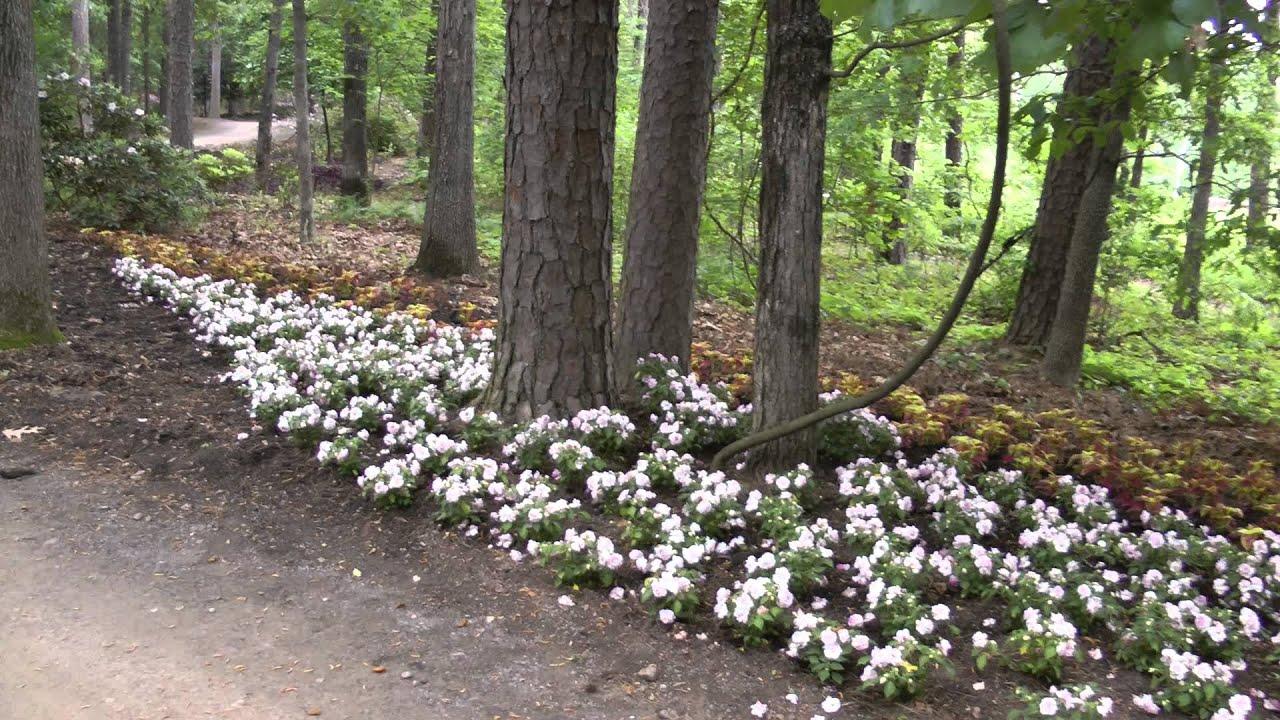 Walking Tour Garvan Woodland Gardens In Hot Springs Arkansas Youtube
