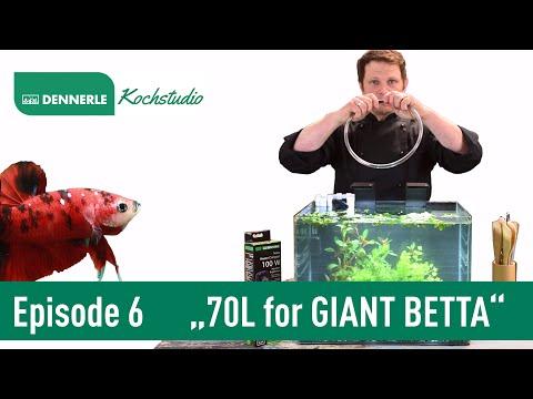 70L SCAPER'S TANK für einen GIANT BETTA | Aquarium nach Rezept Episode 6 | DENNERLE