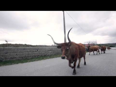A Portuguese Adventure   Episode 4 longboard portugal HD