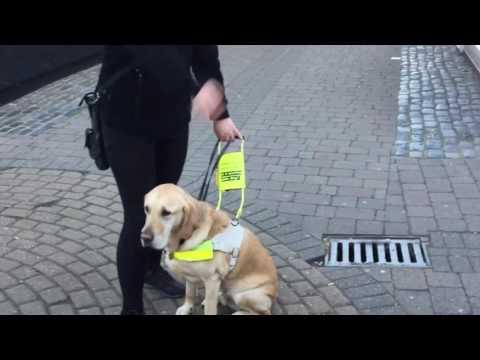 UK Guide Dog Mac's Final Walk - End of Watch