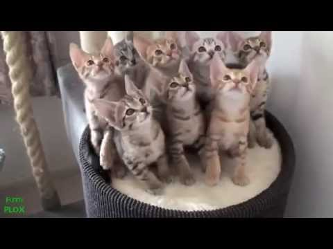 Смешное видео про кошек - Смешное видео онлайн