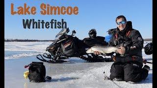 Ice Fishing Lake Simcoe Whitefish