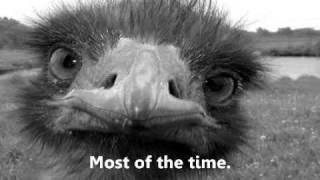 Vertebrate Zoology Finals Study prep ballad