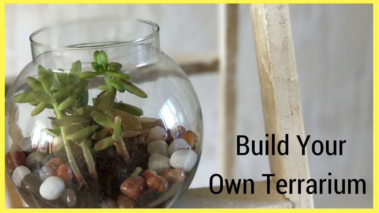 Diy How To Make A Terrarium For Indian Weather Youtube