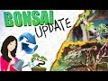 GROWING BONSAI! - Progression & Updates