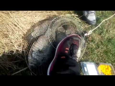 Pescuit sportiv in Romania, Filmul from YouTube · Duration:  29 minutes 53 seconds