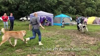 Выставка собак. Владивосток. 25 августа 2018 г.