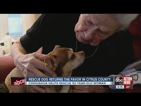 Rescue dog saves 92-year-old Inverness owner