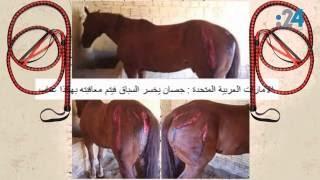 خبر ليس خبراً: تعذيب الأحصنة في الإمارات.. حتى الموت!!