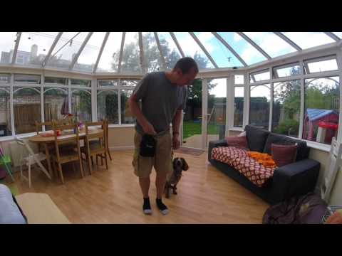 Training your dog not to pull: Magic hand & loose-leash walking