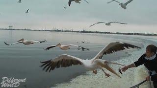 Полет птиц. Интересное видео о животных №6