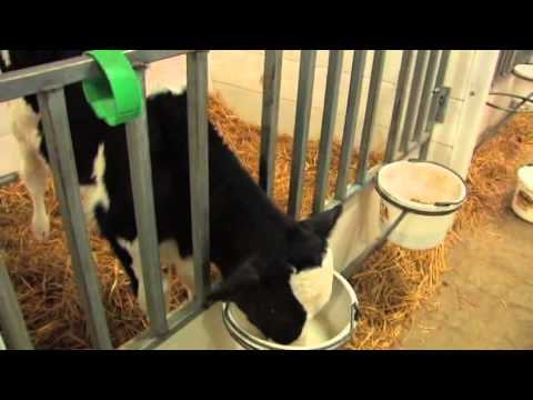 Agriculture: Minnesota Livestock Farmers, Dairy Production