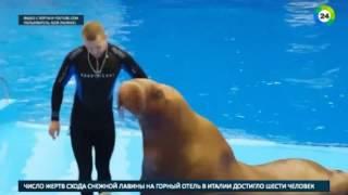 Животных в Приморском океанариуме убили   МИР24
