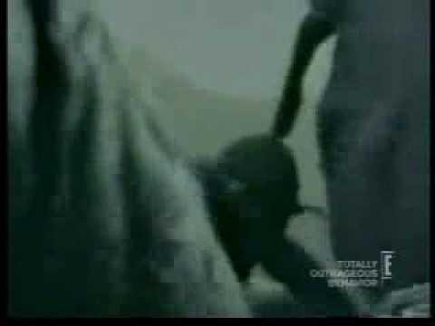 free-mans-head-in-elephants-butt-amatuer-porn-videostures