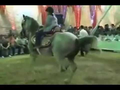 اضغر طفل يرقص بالحصان thumbnail