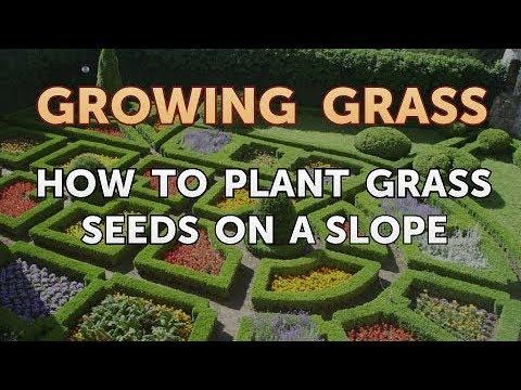 Planting Gr Seed On A Slope Garden Design Ideas