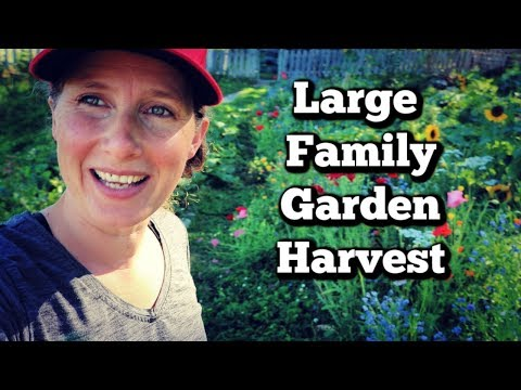 Large Family Garden Haul | Root Cellar Food Storage Tips