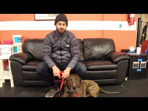 Dog Training | Fred Drop Off | Solid K9 Training Dog training