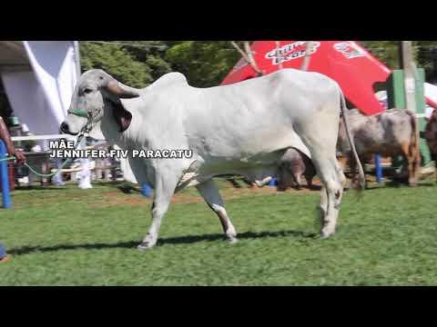 LOTE 16   QUENTURA FIV PARACATU - RCBR420