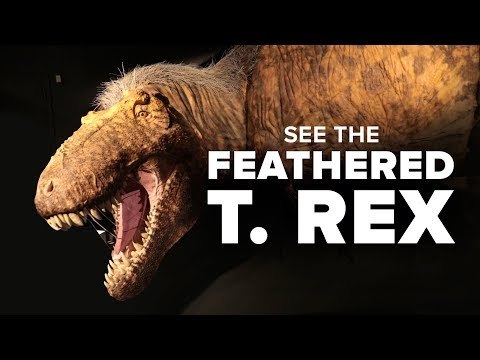 T. Rex As You've Never Seen It Before