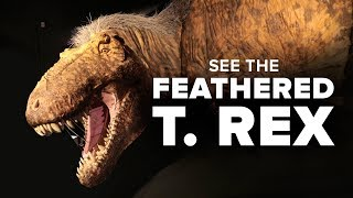 "The American Museum of Natural History unveils an exhibit called ""T..."