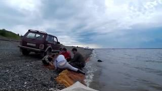 Невод(Часть 2)Сиг,Тугун.День прошёл успешно.(Сиг тугун рыбалим неводом., 2015-06-27T15:59:47.000Z)