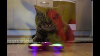Кот смотрит на спиннер и видит флешбэки; Cat sees a fidget spinner and gets flashbacks