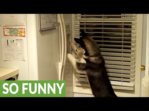 Husky knows how to operate refrigerator ice machine