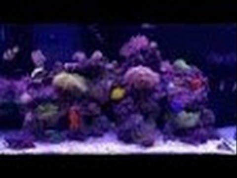 Вентилятор охлаждения (кулер) ISTA на аквариуме - YouTube