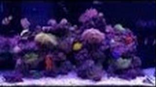морской аквариум (часть 10) - уборка и чистка в аквариуме.