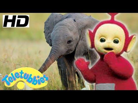 ★Teletubbies English Episodes★ Baby Elephant ★ Full Episode - HD (S12E19)