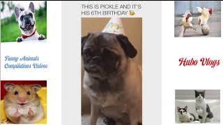 Try Not To Laugh - LifeAwesome Funny Dogs Compilation 2019 - Funny Animals 2019