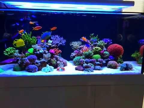 Sps Lps Reef Tank 260 Gallon