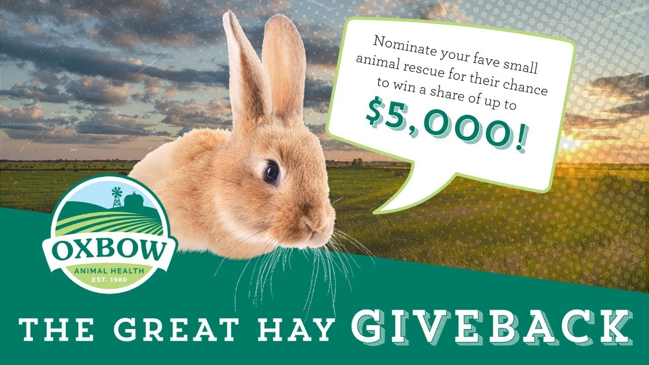 Lake Country bunny sanctuary needs your help to get hay