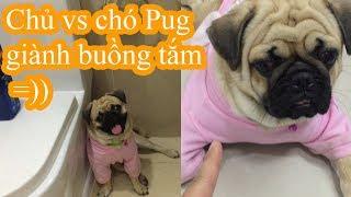 🏊Chó Pug Giành Buồng Tắm Với Chủ Siêu Lầy Lội =))😅 Thằng Bư Nó Không Cho Tui Tắm :(( Pugk Vlog