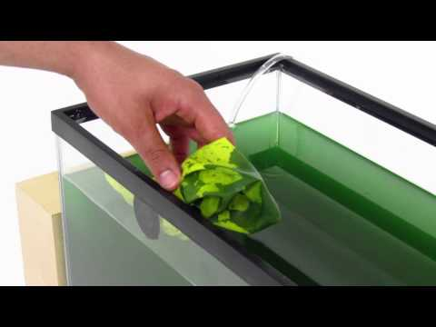Grow Spirulina at Home: Kickstarter Video