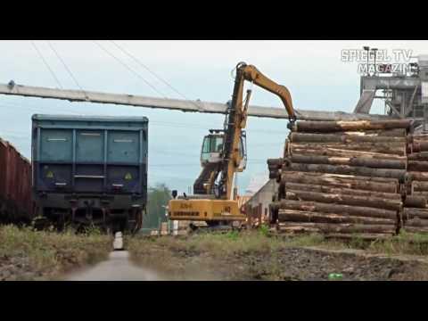 Spiegel TV Magazin - Illegal Wood Trade - Trailer