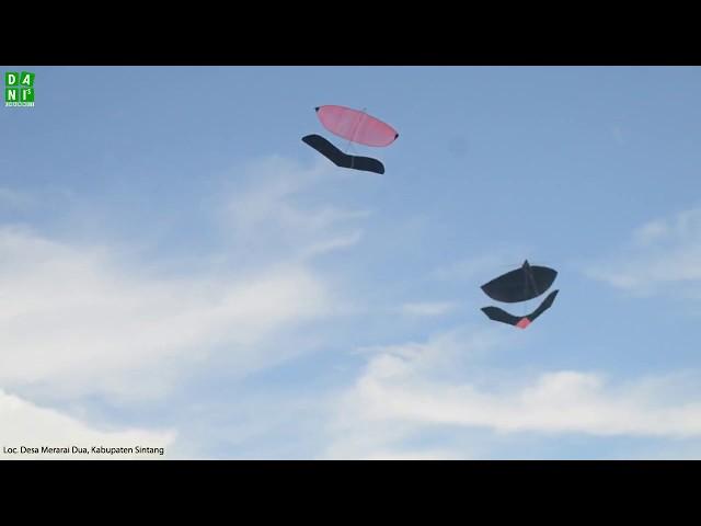 Sendaren Indonesia Traditional Kite from Sintang
