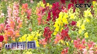 [中国新闻] 广东佛山:春暖花开万物复苏 | CCTV中文国际