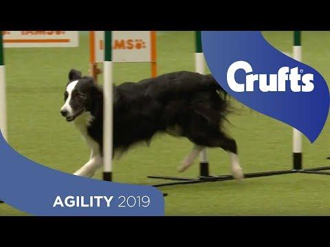 Agility Championship Round 2 – Agility - Large | Crufts 2019