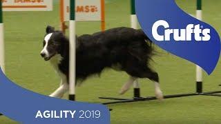 Agility Championship Round 2 – Agility  Large | Crufts 2019