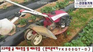 [신성농기계]얀마관리기 고구마밭 제초작업 후 배토작업(…